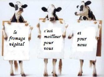 Conseil des vaches : le fromage végétal est meilleur pour vous et  pour nous...